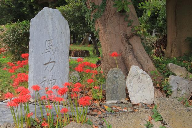 Photos: 857 東金沢の馬力神