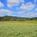 常陸太田の蕎麦畑 常陸秋そば