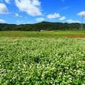 常陸秋そば 常陸太田の蕎麦畑