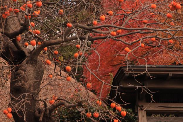 Photos: 671 小野家住宅