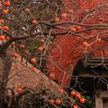 Photos: 763 小野家住宅