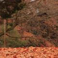Photos: 969 南高野史跡公園