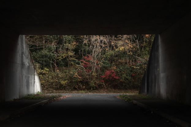Photos: 243 砂沢の紅葉