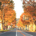 Photos: 791 多賀 けやき並木
