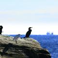 Photos: 290 裸島 太田尻海岸