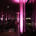 冬のさくらまつり 2020 日立駅ライトアップ