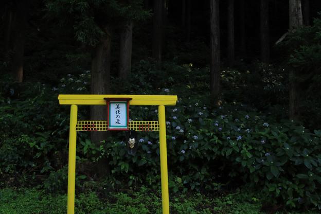 Photos: 535 美化の道