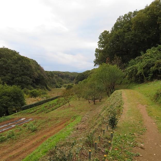 奈良ばい谷戸