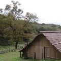 Photos: 炭焼き小屋