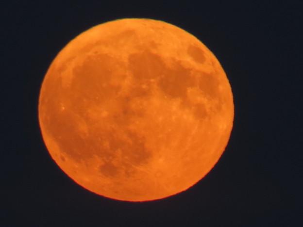 赤い満月!