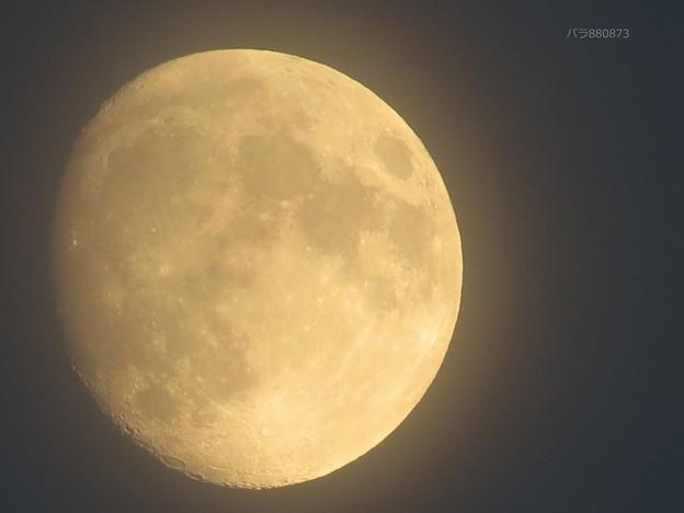 写真: 美しく輝くお月様♪