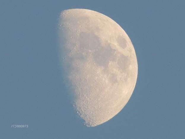 Photos: 月齢9,3のお月様♪