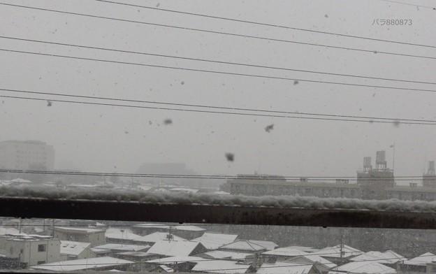 舞う雪!積もる雪!