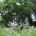 ヒメジョオン咲き乱れる森♪