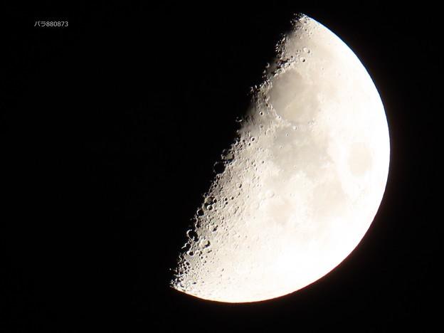 Photos: 煌々と輝く上弦の月♪