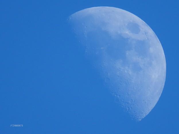 Photos: 上弦の月♪