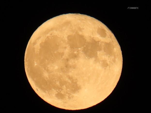 Photos: 満月♪