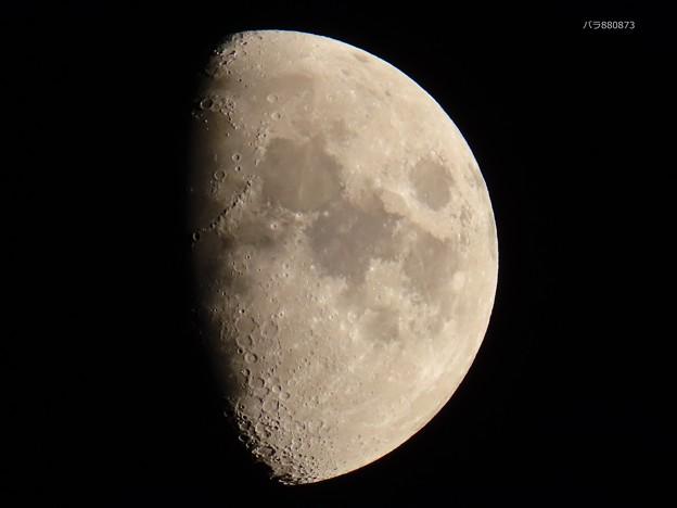 Photos: 10月25日のふっくらお月様♪