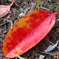Photos: きれいな紅葉♪