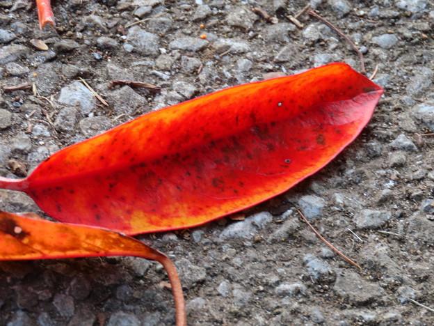 紅葉の落ち葉がきれい♪
