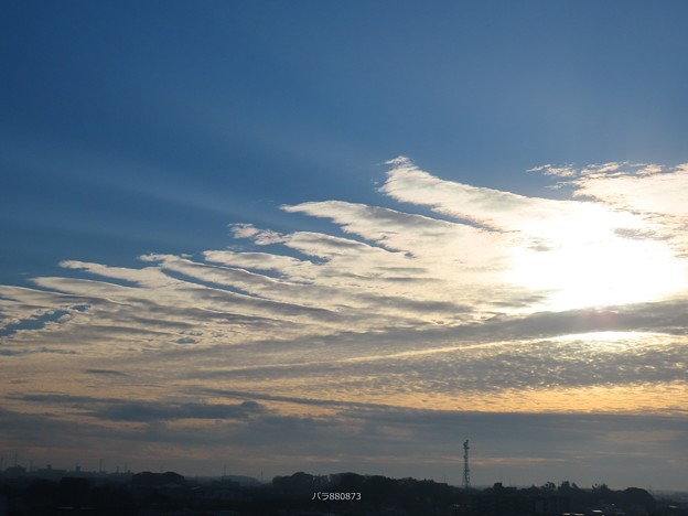 Photos: 巻積雲が鳥の羽のよう♪