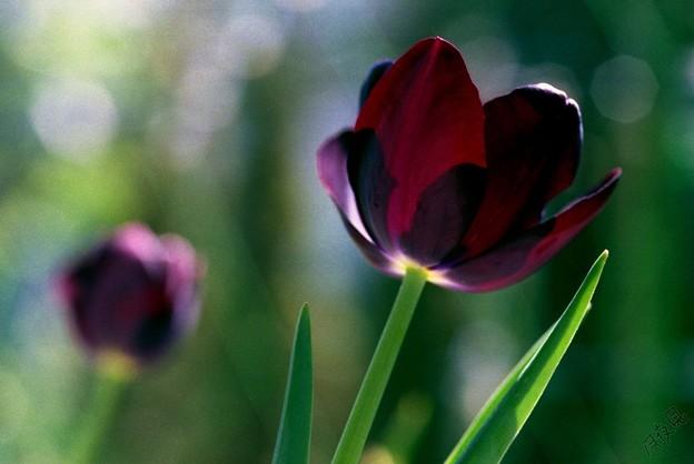 Photos: 春の陽気