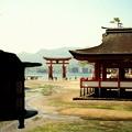 Photos: 厳島神社より