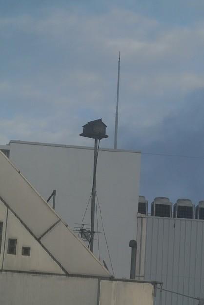ビルの屋上に鳥の巣箱?