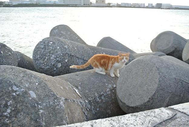 毛艶ピカピカつやつやの海岸の野良猫