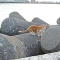 Photos: 毛艶ピカピカつやつやの海岸の野良猫