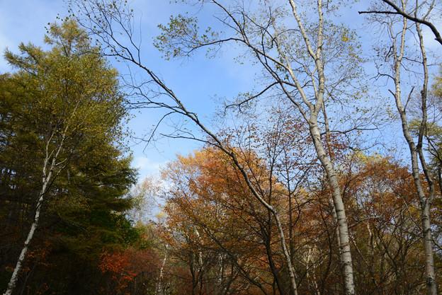 青空と秋色の森