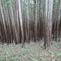 びっしり植林