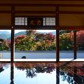 Photos: 床もみじ