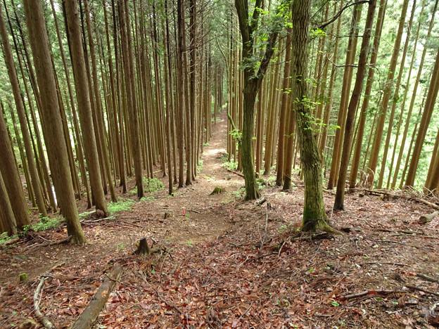 真っすぐな木も道も