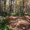 Photos: 沼ッ原湿原から三斗小屋への分岐点
