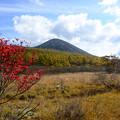 沼ッ原湿原から白笹山