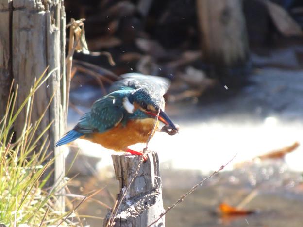 Photos: 小魚をゲット