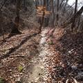 落ち葉いっぱいの路