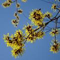 Photos: まんず咲く