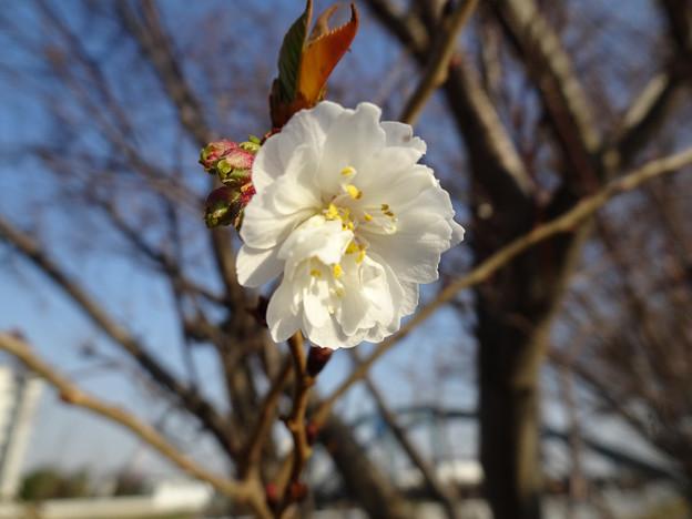 咲いた咲いたOOOが咲いた