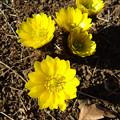 Photos: 黄色いパラボラ