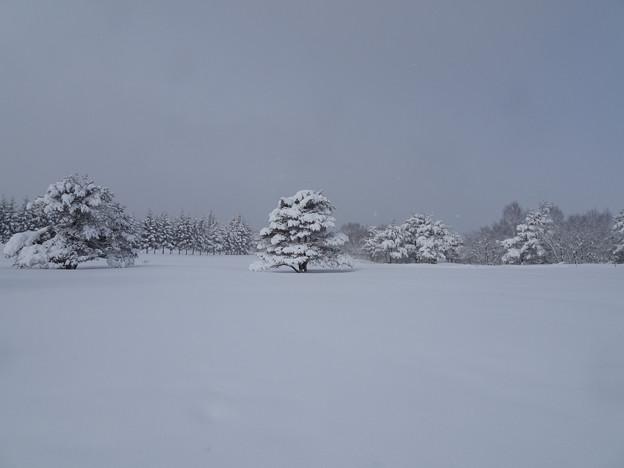 雪降る雪原の木