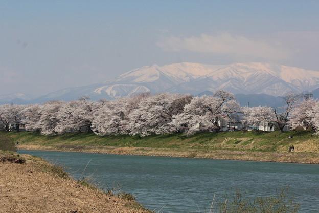26.4.12一目千本桜