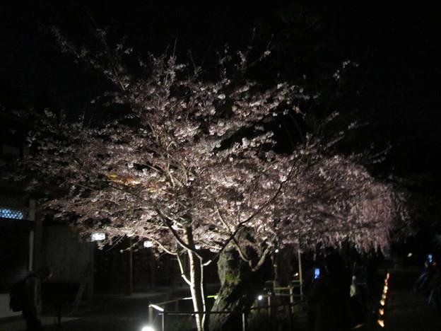 29.4.14しおがまさま 神々の花灯り(その6)