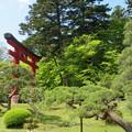Photos: 30.5.5緑眩しい志波彦神社鳥居付近