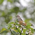 Photos: ミズキに来る野鳥達