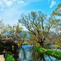 写真: 春影