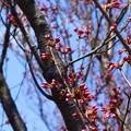 写真: 枝芽