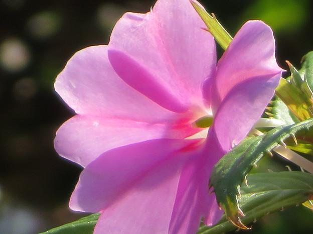 Photos: 冬を越して春になってきたけど夏の花