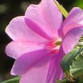 写真: 冬を越して春になってきたけど夏の花